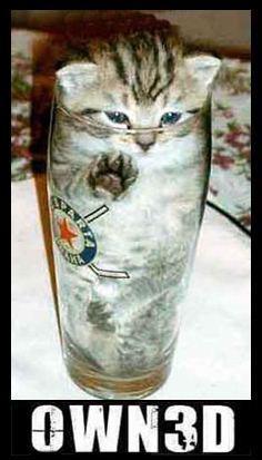 owned-cat.jpg